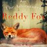 The Adventures of Reddy Fox - äänikirja